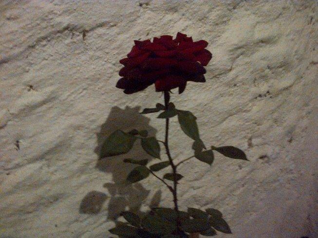 la sombra de la flor
